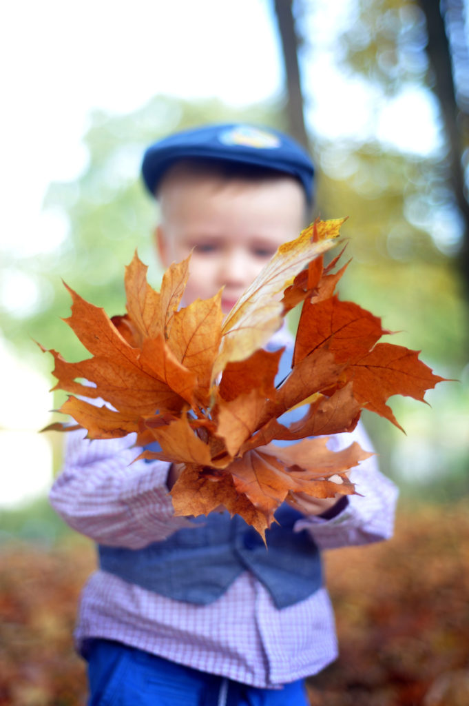 activite automne plein air foret